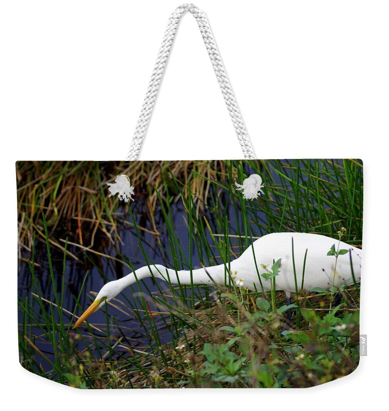 Birds Weekender Tote Bag featuring the photograph A Fishing We Will Go by Marty Koch