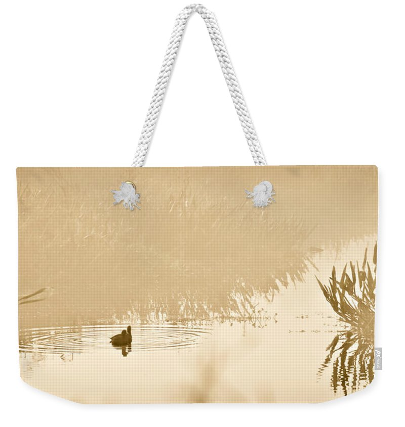 Ducks Swimming Weekender Tote Bag featuring the photograph A Foggy Morning Swim by Carolyn Marshall