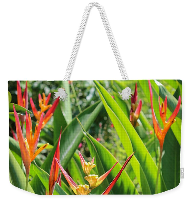 Arnold's Butterfly Garden Weekender Tote Bag featuring the photograph A Garden Paradise by Liesl Walsh