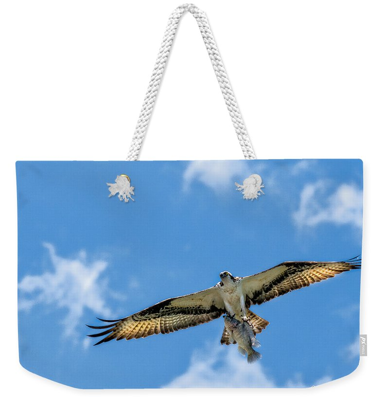 Avian Weekender Tote Bag featuring the photograph A Good Day Fishing by Christopher Holmes