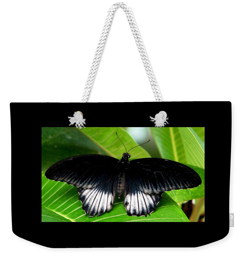 Butterflies Weekender Tote Bag featuring the photograph A Graceful Beauty by Angela Davies