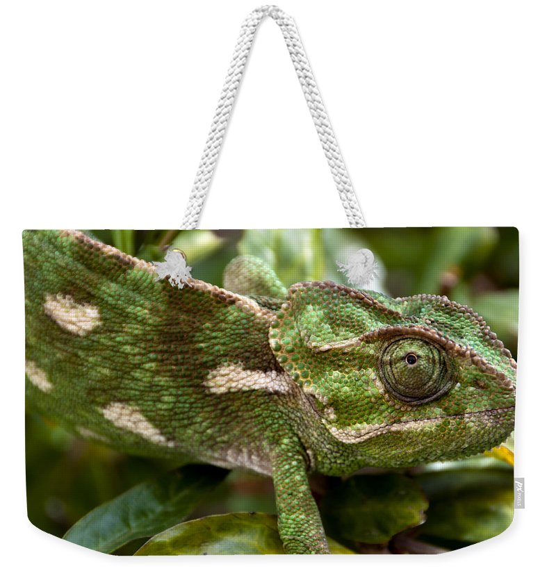 Chamaeleonidae Weekender Tote Bag featuring the photograph A Green Chamaeleonidae by Focus Fotos