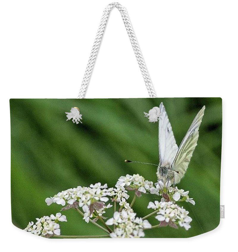 Insectsofinstagram Weekender Tote Bag featuring the photograph A Green-veined White (pieris Napi) by John Edwards