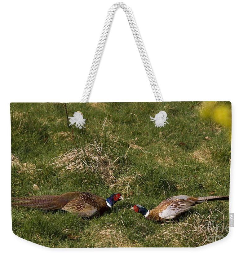 Pheasant Weekender Tote Bag featuring the photograph A Little Argue by Angel Tarantella