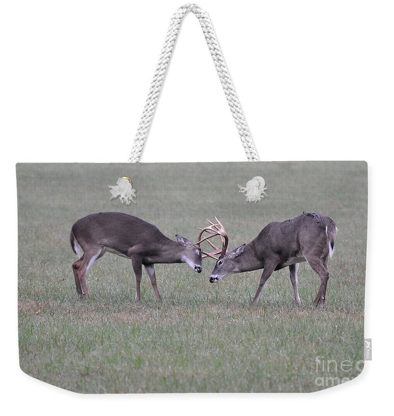 Bucks Weekender Tote Bag featuring the photograph A Little Dispute by Todd Hostetter
