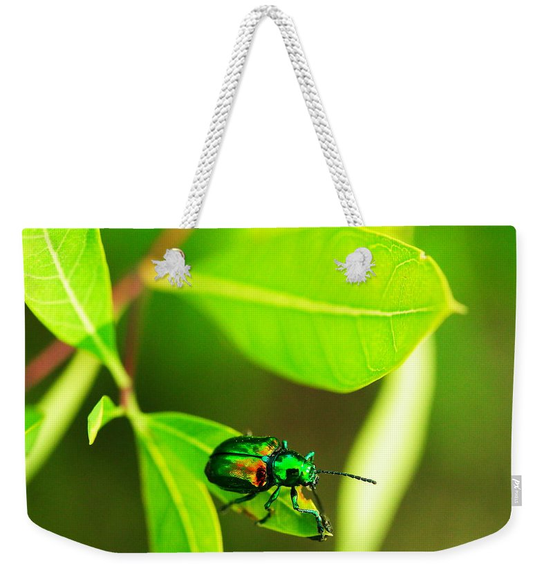 Beatle Weekender Tote Bag featuring the photograph A Little Red Beatle by Jeff Swan