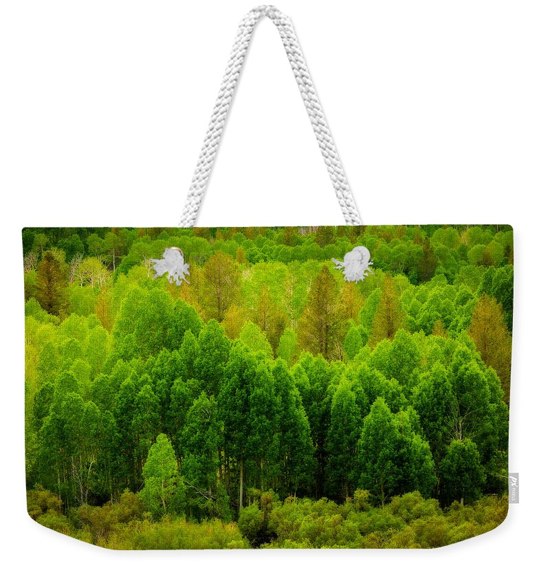 Aspen Weekender Tote Bag featuring the photograph A Moment Of Green by Dan Holmes