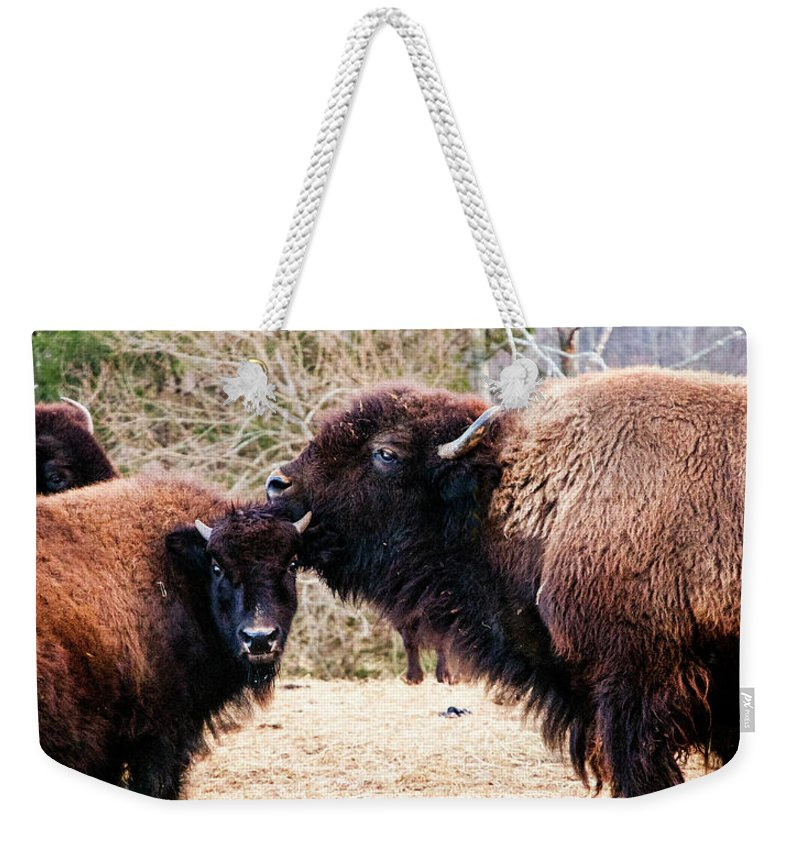 Nature Weekender Tote Bag featuring the photograph A Mother's Love by Broken Soldier