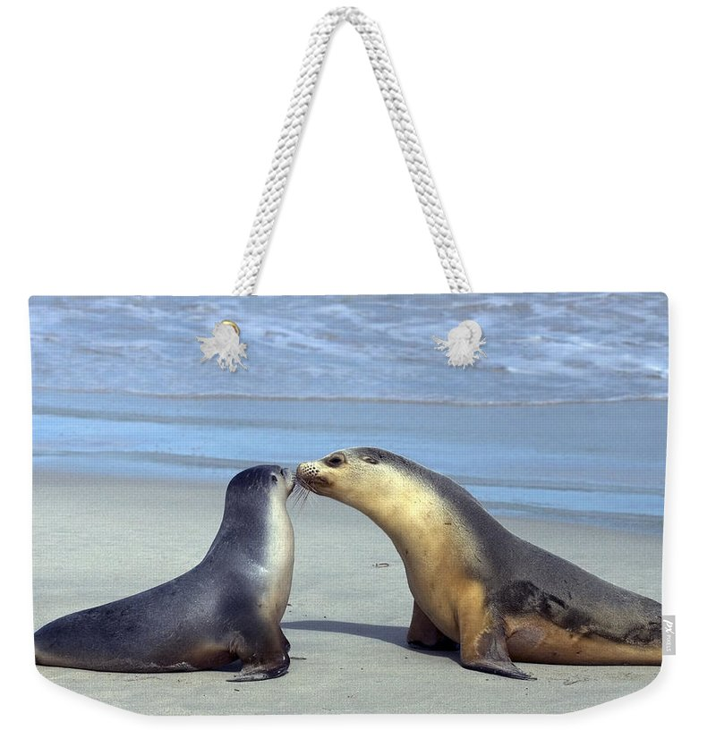 Sea Lion Weekender Tote Bag featuring the photograph A Mothers Love by Mike Dawson
