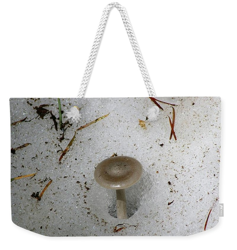 Mushrooms Weekender Tote Bag featuring the photograph A Mushroom In Snow by Jeff Swan