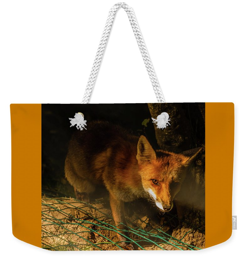 Animal Weekender Tote Bag featuring the photograph A Nocturne Meeting With A Fox In The Woodland by Susanna Mattioda