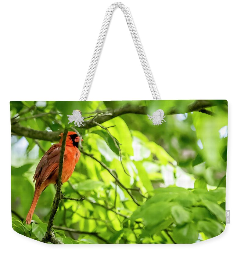 Bird Weekender Tote Bag featuring the digital art A Northern Cardinal Enjoying The Springtime by Ed Stines