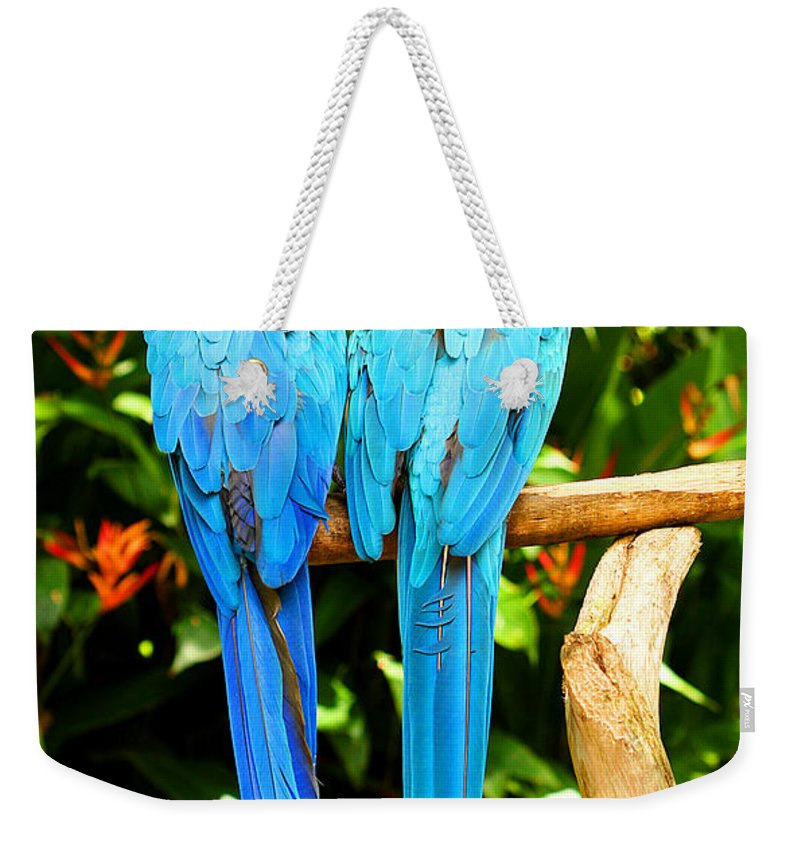 Bird Weekender Tote Bag featuring the photograph A Pair Of Parrots by Marilyn Hunt