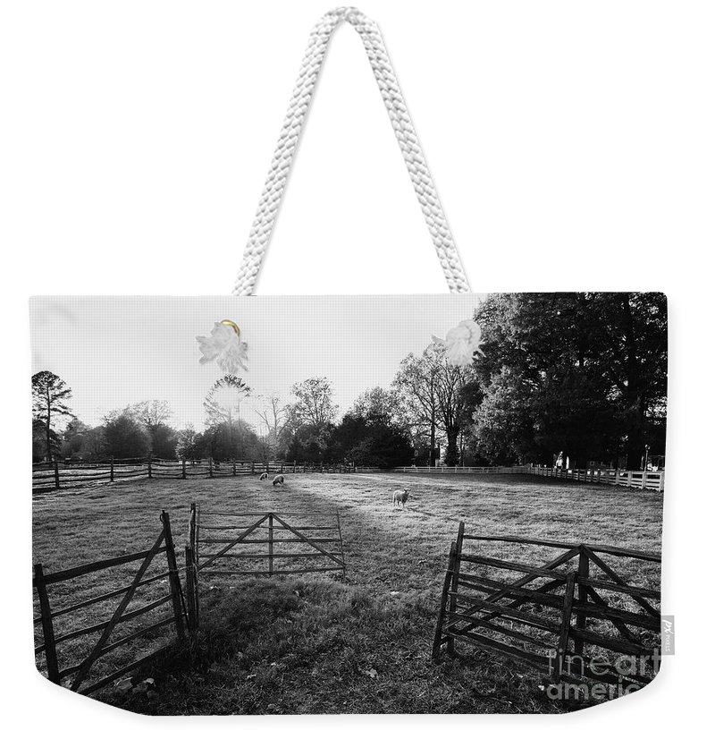 Pasture Weekender Tote Bag featuring the photograph A Pasture Scene by Rachel Morrison