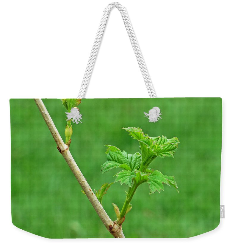 Blooming Weekender Tote Bag featuring the photograph A Perpetual Astonishment by Jessica Tolemy