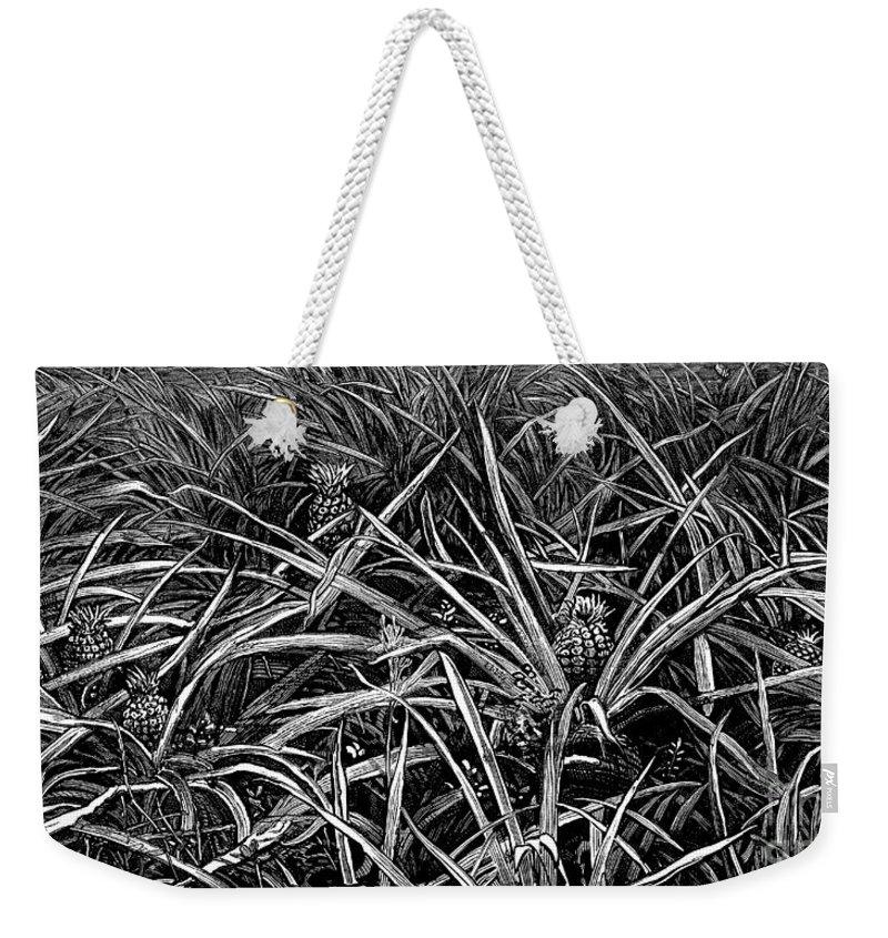 Plantation Drawings Weekender Tote Bags