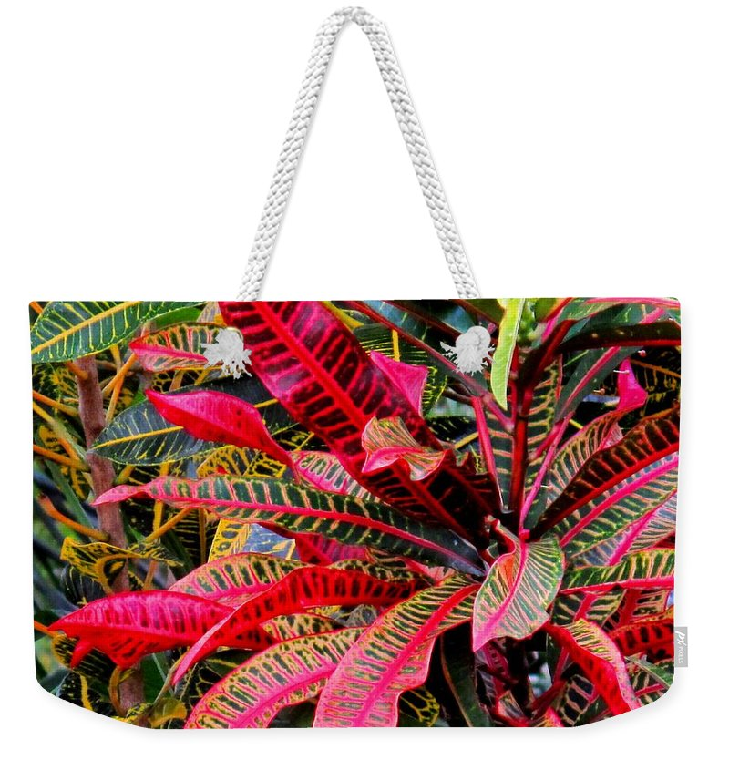 Red Weekender Tote Bag featuring the photograph A Rich Composition by Ian MacDonald