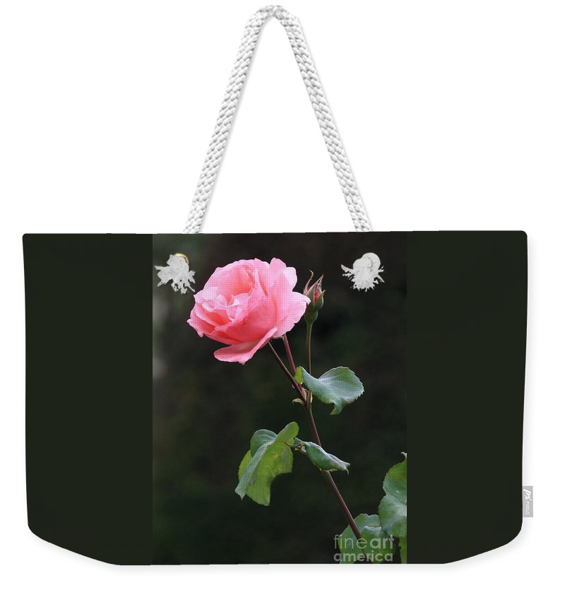 Pink Rose Weekender Tote Bag featuring the photograph A Rose For Rodin by Carol Groenen