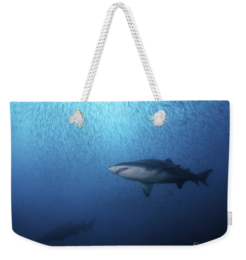 North Carolina Weekender Tote Bag featuring the photograph A Sand Tiger Shark And School Of Cigar by Brent Barnes