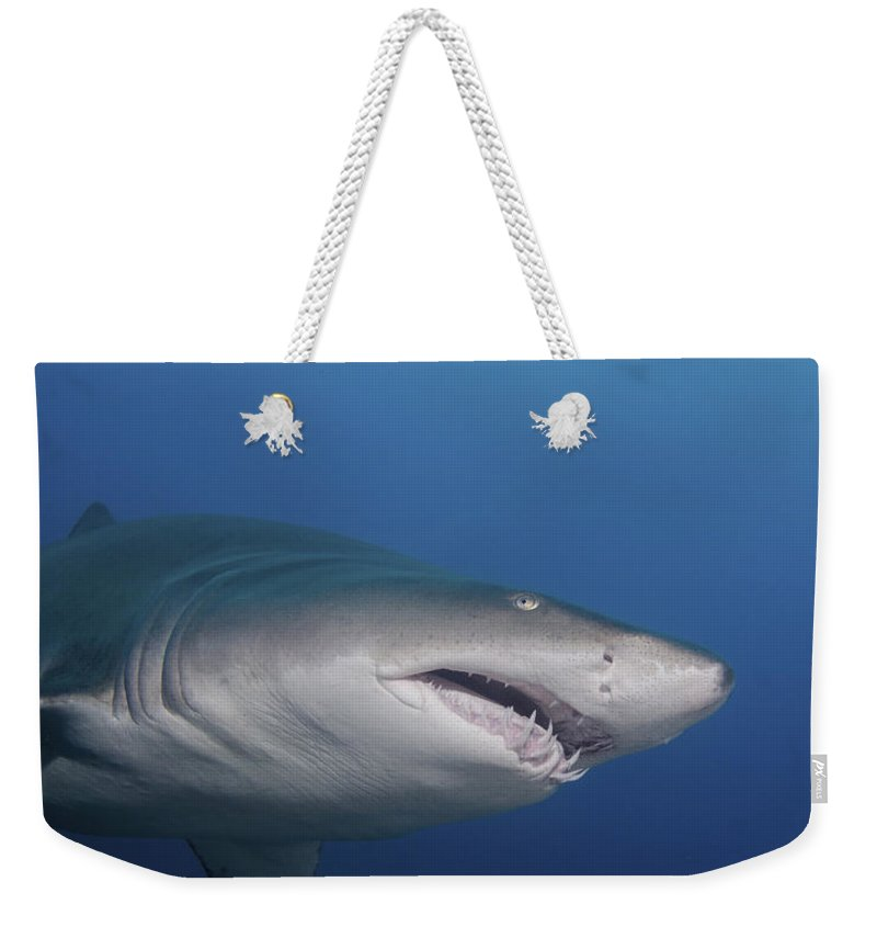 North Carolina Weekender Tote Bag featuring the photograph A Sand Tiger Shark Off The Coast by Brent Barnes