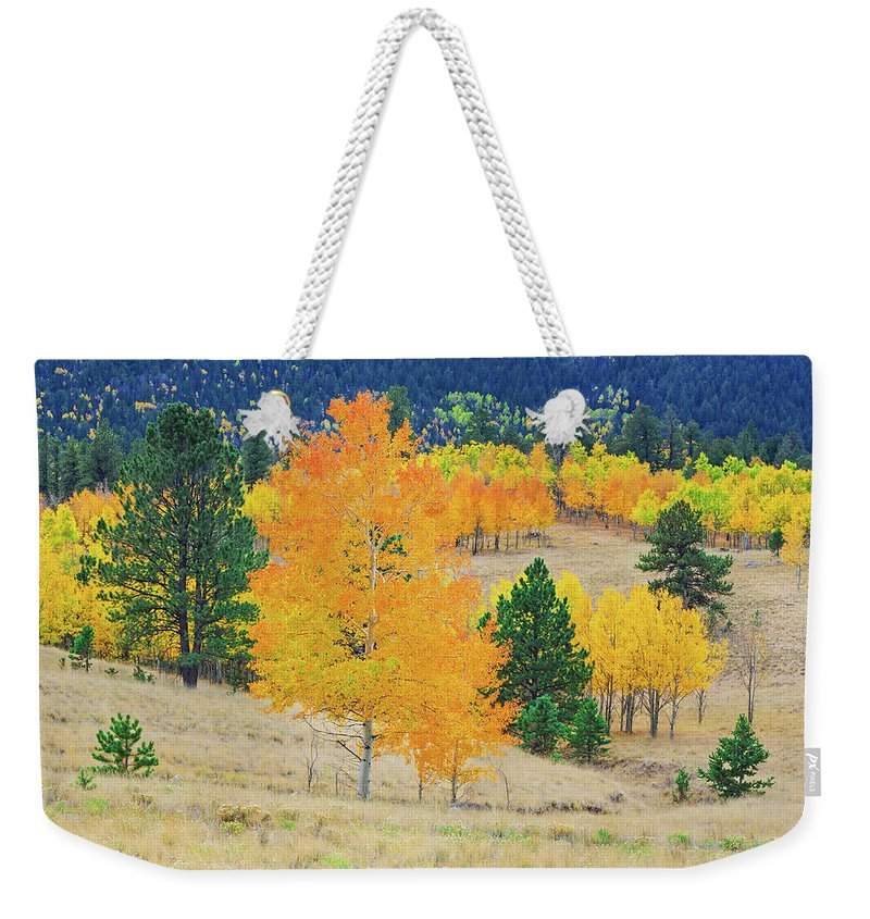 Wilkerson Pass Weekender Tote Bag featuring the photograph A Shady Sylvan Glade by Bijan Pirnia