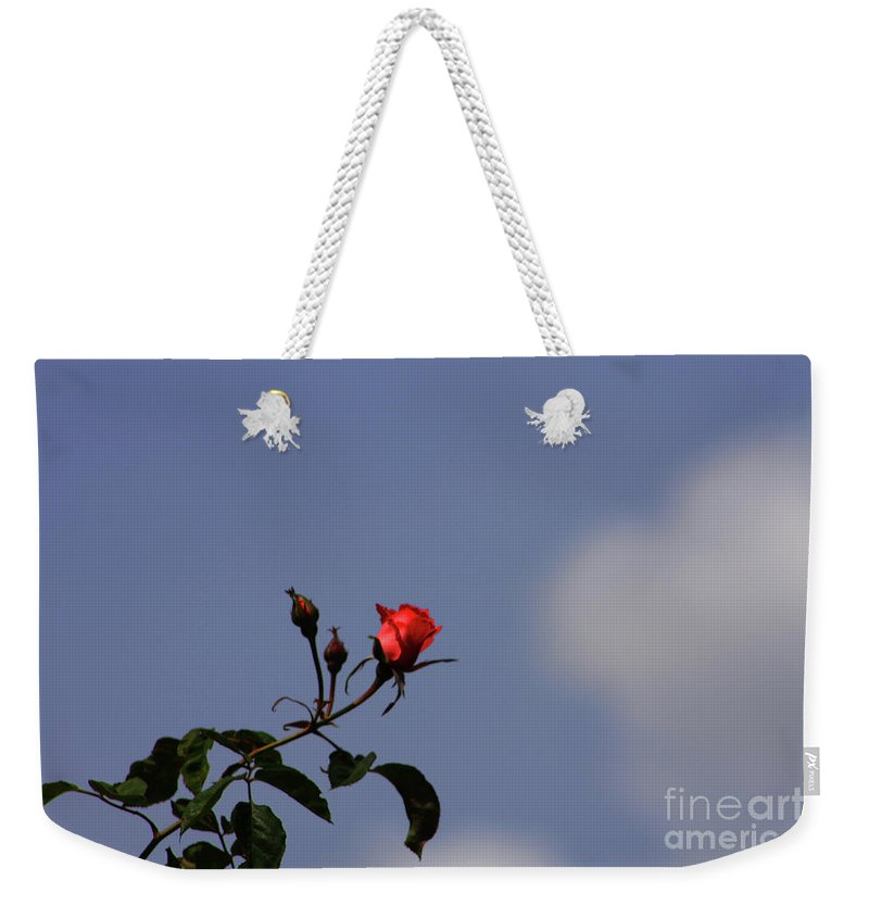 Rose Weekender Tote Bag featuring the photograph A Single Rose by Tommy Anderson