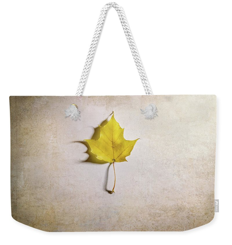 Designs Similar to A Single Yellow Maple Leaf