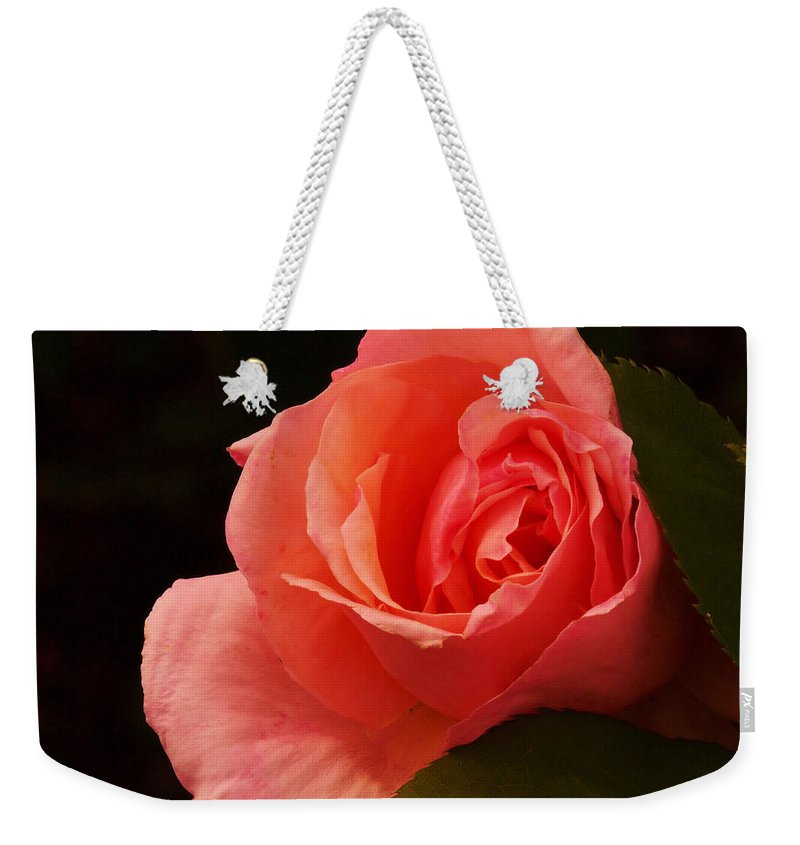 Flowers Weekender Tote Bag featuring the photograph A Soft Rose by Jeff Swan