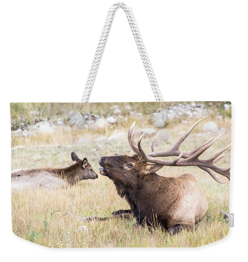 Elk Weekender Tote Bag featuring the photograph A Song Of Love by Alex Lapidus