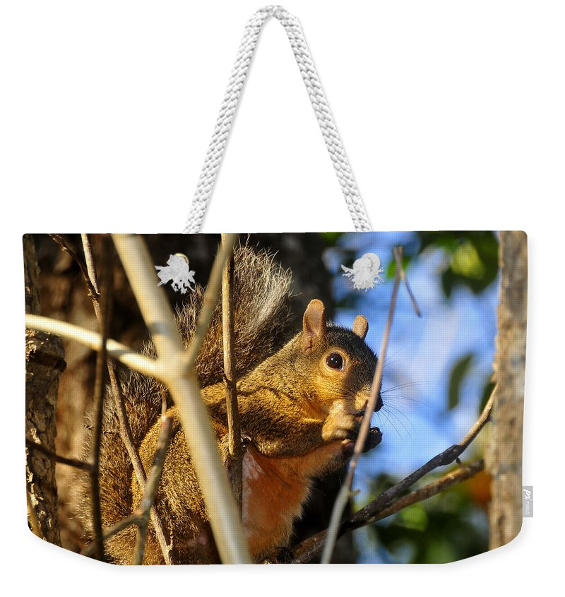 Squirrel Weekender Tote Bag featuring the photograph A Squirrel's Feist by David Lee Thompson