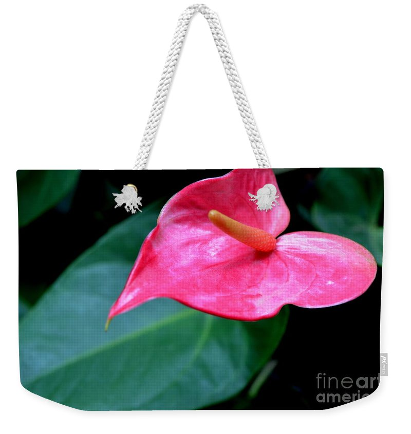 Pink Anthurium Weekender Tote Bag featuring the photograph A Stand Alone Stand Out by Mary Deal