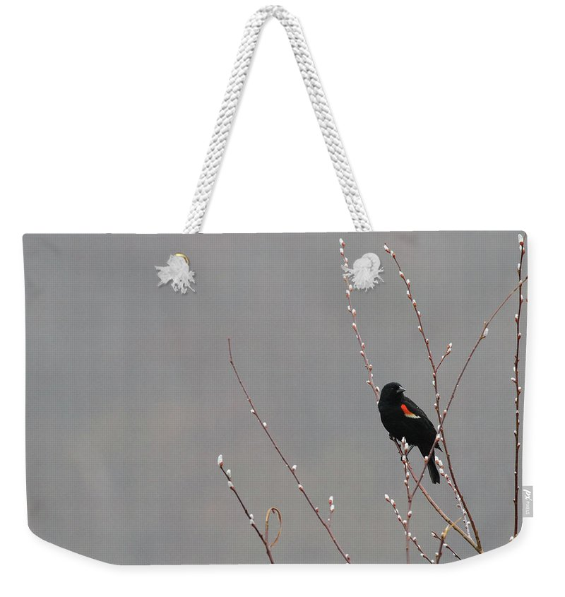 Spring Weekender Tote Bag featuring the photograph A Sure Sign Of Spring by Karol Livote