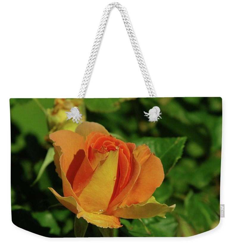 Roses Weekender Tote Bag featuring the photograph A Wet Rose by Jeff Swan