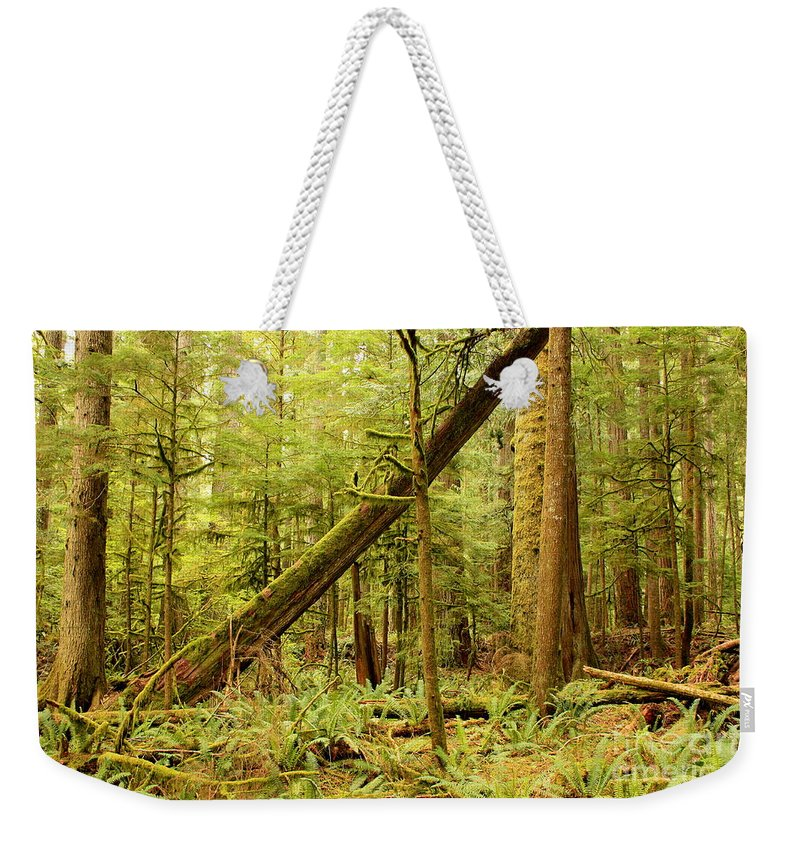 Washington Landscape Weekender Tote Bag featuring the photograph A Whisper In The Rainforest by Carol Groenen