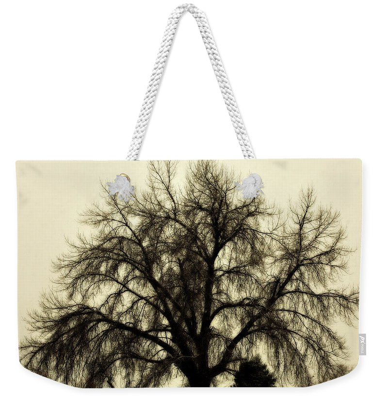 Tree Weekender Tote Bag featuring the photograph A Winter's Day by Marilyn Hunt