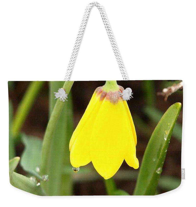Flower Weekender Tote Bag featuring the photograph A Yellow Bell's Tear by DeeLon Merritt