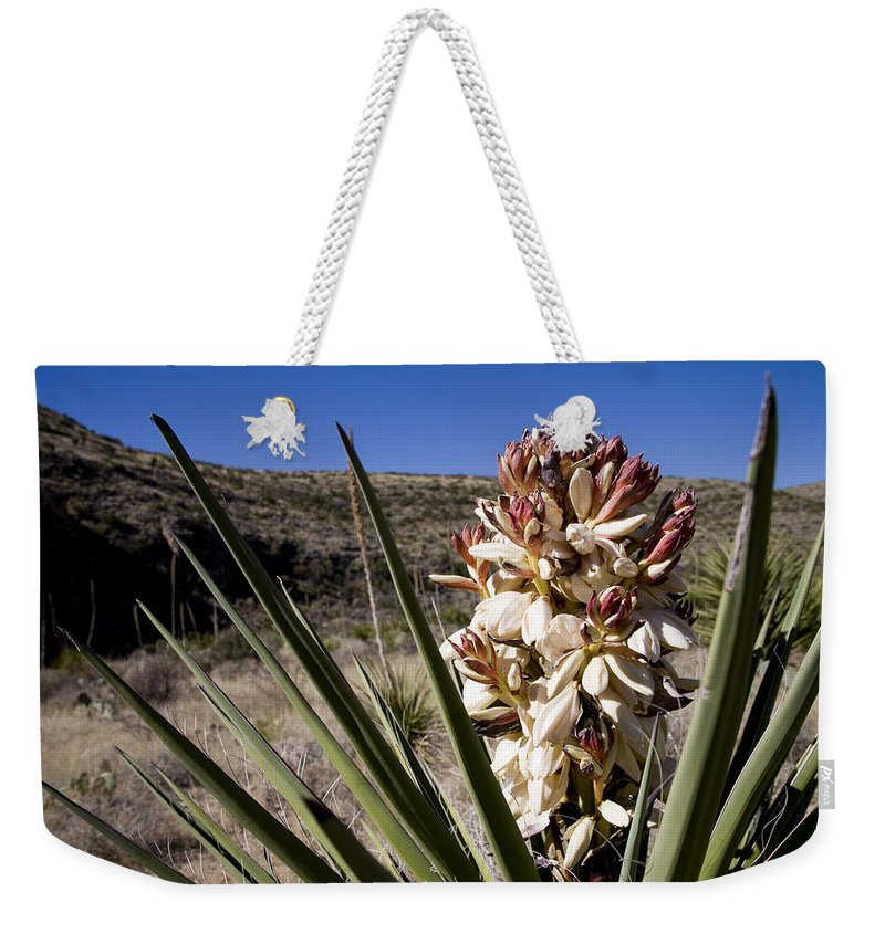 Carlsbad Caverns National Park Weekender Tote Bag featuring the photograph A Yucca Plant Blossoms In The Desert by Stephen St. John