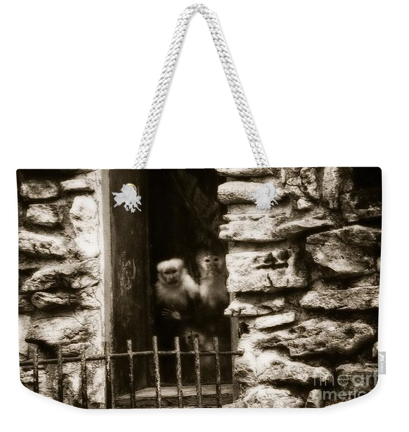 Featured Weekender Tote Bag featuring the photograph Able's Kin by Jenny Revitz Soper