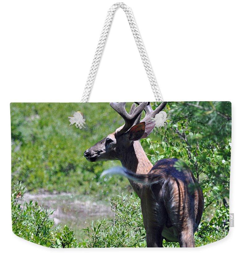 Buck Weekender Tote Bag featuring the photograph Acadia Buck 2 by Glenn Gordon