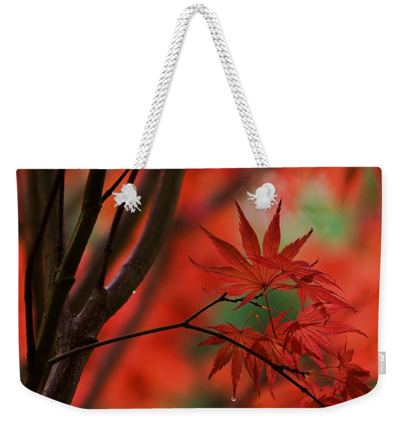 Acer Weekender Tote Bag featuring the photograph Acer Fanfare by Mike Reid