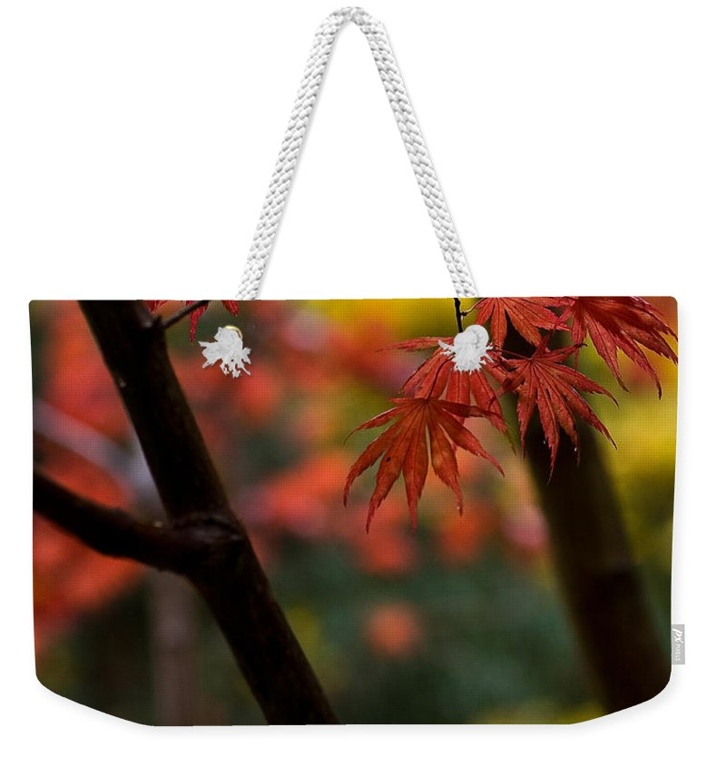 Acer Weekender Tote Bag featuring the photograph Acer Finish by Mike Reid