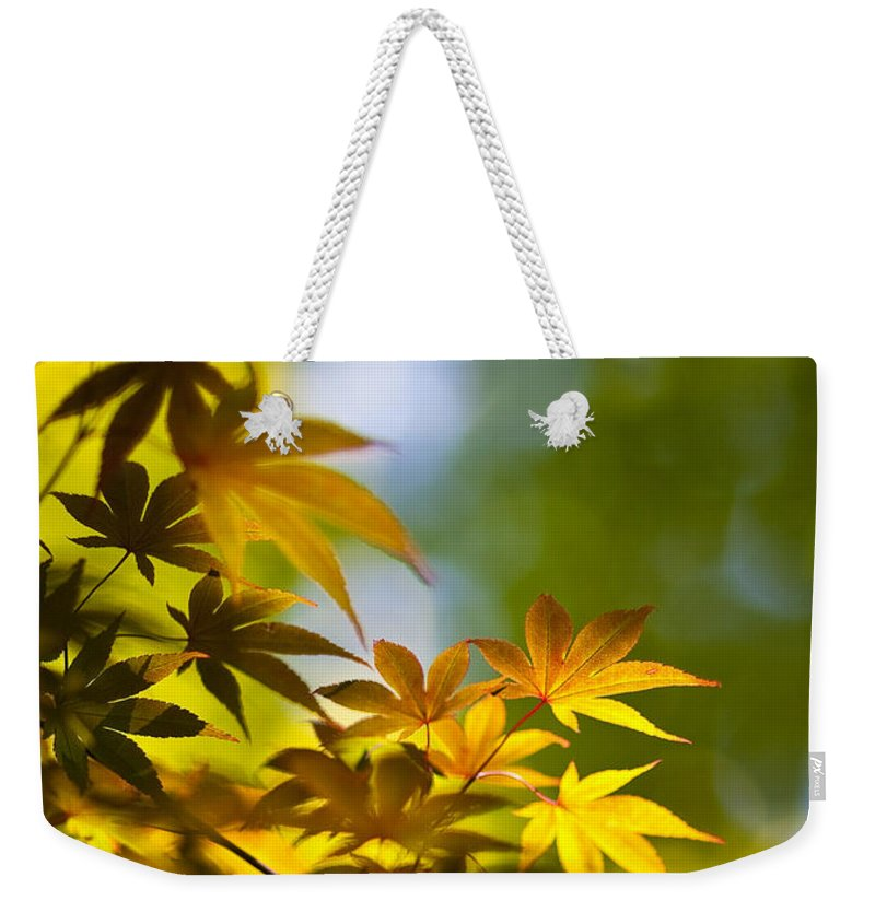 Japanese Maples Weekender Tote Bag featuring the photograph Acer Glow by Mike Reid