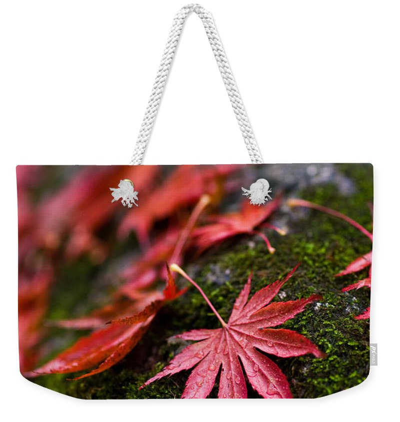 Acer Weekender Tote Bag featuring the photograph Acers Fallen by Mike Reid