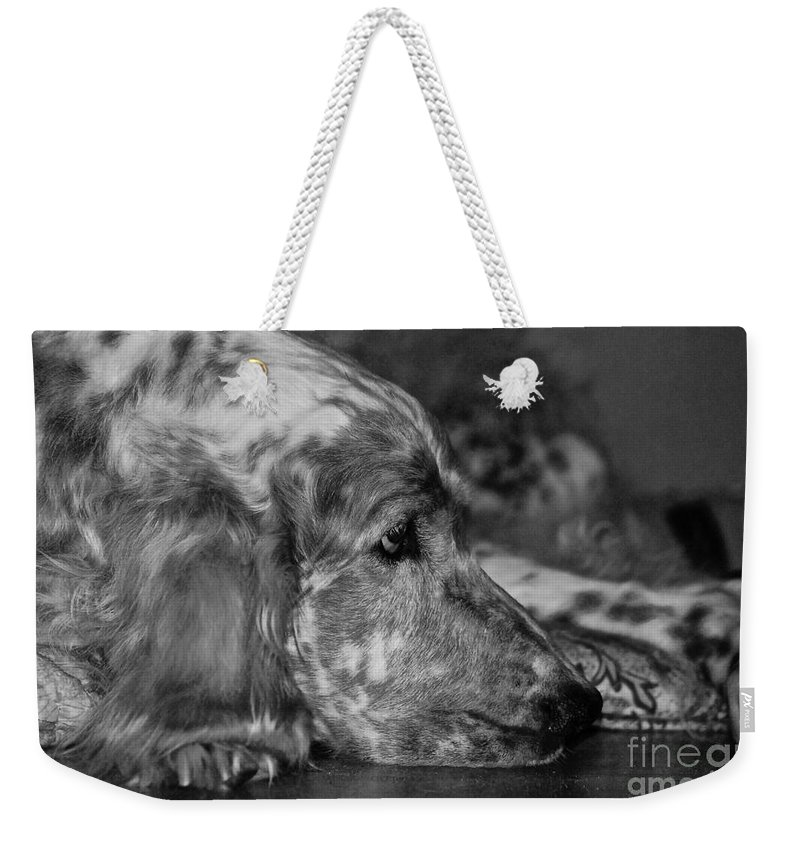 Dog Weekender Tote Bag featuring the photograph Addelaide by Andrea Spritzer