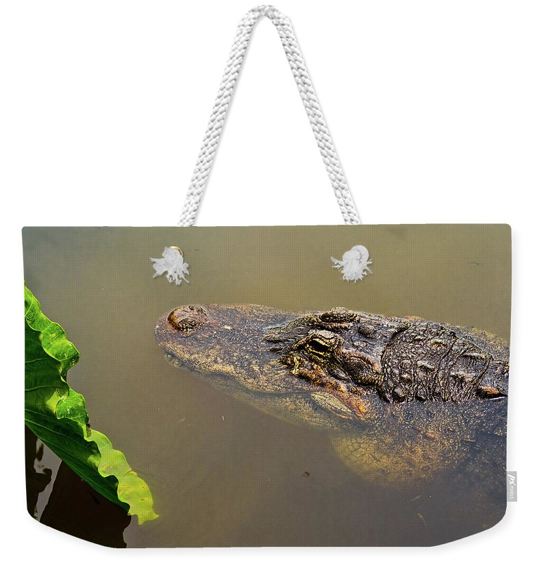 Alligator Weekender Tote Bag featuring the photograph Admiring The Leaf by Christopher Holmes