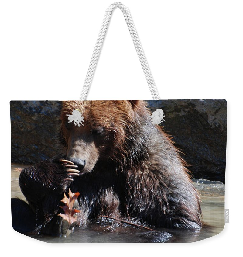 Grizzly Weekender Tote Bag featuring the photograph Adorable Grizzly Bear Playing With A Maple Leaf While Sitting In by DejaVu Designs
