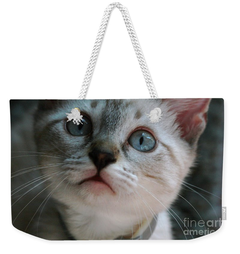Cats Weekender Tote Bag featuring the photograph Adorable Kitty by Kim Henderson
