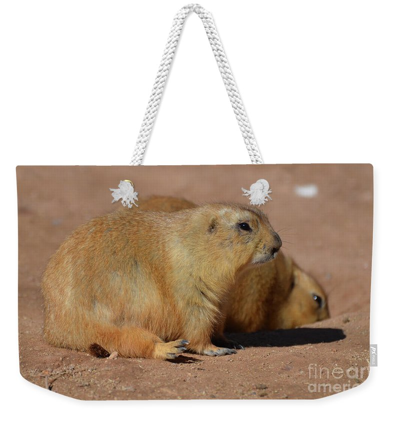 Prairie-dog Weekender Tote Bag featuring the photograph Adorable Pair Of Chubby Black Tailed Prairie Dogs by DejaVu Designs