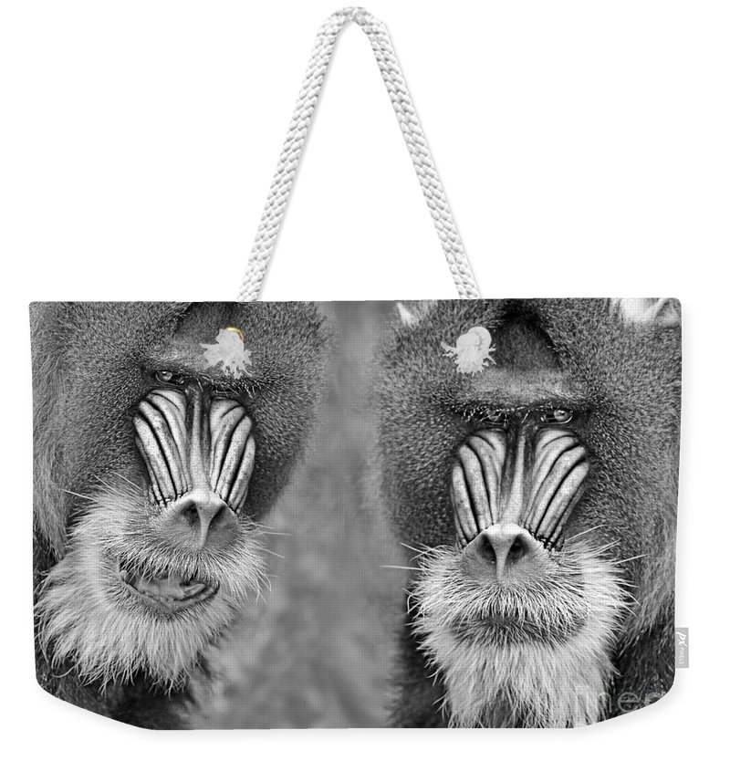 Mandrill Weekender Tote Bag featuring the photograph Adult Male Mandrills Black And White Version by Jim Fitzpatrick