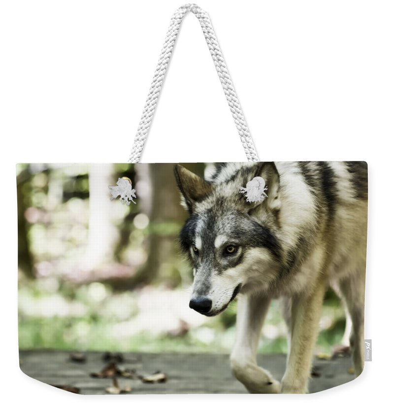 Aero Wolf 1 Weekender Tote Bag featuring the photograph Aero Wolf 1 by Tracy Winter